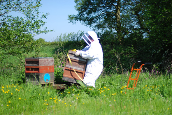 20140517_Bee delivery_0003