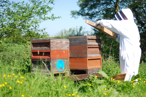 20140517_Bee delivery_0005