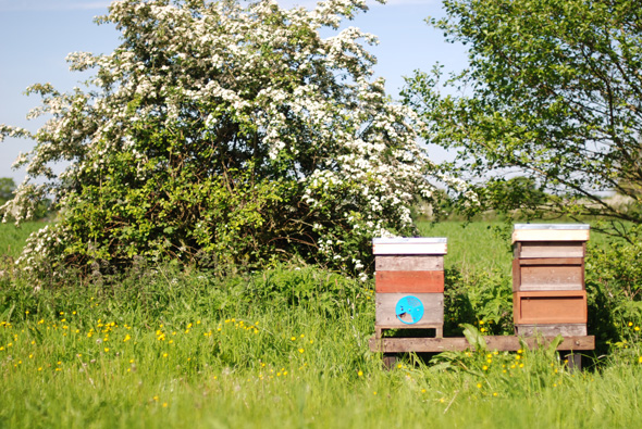 20140517_Bee delivery_0010